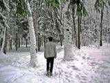 зима... лес... иду в никуда...