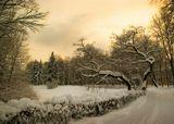 Снег Растительность Парк Зима