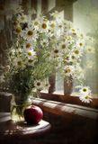 Лето, дача, цветы, ромашки, яблоко