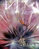 Вот и такие создания иногда можно увидеть на одуванчиках...макро - одуванчик - зонтики