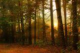 если терем с дворцом кто то занял...*рай в шалаше, шалаш, туман, утро