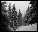 Горы Шварцвальд, январь 2010.