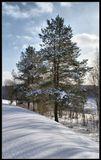 Зима,пейзаж,снег