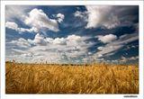 http://www.bfoto.ru/landscape.php пейзажи поля