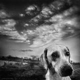 """Из цикла """"Собачья жизнь""""  www.youtube.com/watch?v=73pjIQTGnic  Модераторам: Не переносите эту работу в раздел животные, ведь животные тоже могут быть жанровыми! Спасибо."""