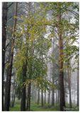 Урал, осень, утро, лес, туман