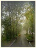 Осень, санаторий, утро, аллея, туман