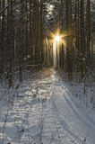 Без солнца,Без яростного светила —Не зря его люди прозвалиЯрило, —Не может быть вёсен,Не может быть песен.Без солнцаВесь мир этот тёмен и тесен.Луч солнца —И в капле, пронизанной светом,И в каждой тропинке,Бегущей по свету,И в каждой слезинке,Что светит в ресницах,И в каждой кровинке,Что в сердце стучится.(Николай Браун)