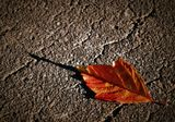 Улетели листья                        с тополей -Повторилась в мире неизбежность...Не жалей ты листья, не жалей,А жалей любовь мою и нежность!Пусть деревья голые стоят,Не кляни ты шумные метели!Разве в этом кто-то виноват,Что с деревьев листья                                  улетели?