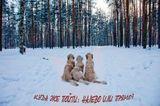 Это мои собаки - голден ретриверы. Парк Сосновка