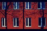 Силуэты живой природы на фоне городского ландшафта. архитектура,город,геометрия,зарисовка