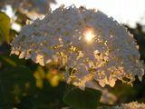лето, солце, цветы