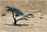 Израиль. Пустыня Негев. Кратер Рамон.