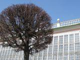 дерево, архитектура, парк