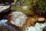 Алтай, лето, река, ручей, рябина.