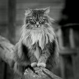 кошка кот ЧБ Pentax K10D