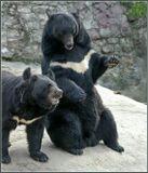 Снято в Московском зоопарке...