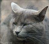 """Всё тот же весенний кот - хозяин двора, лично мне он здесь нравится даже больше, своим филосовским выражением.... чуть не сказала """"лица"""". ;))"""
