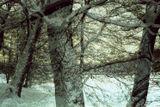 2010, дерево, зима, мульти, пленка, снег, цвет