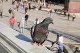 .птица в городе)))