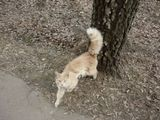 Кошка на прогулке    День