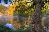 Склонилось дерево над быстрою водой, туман спускается, усталый и седой.