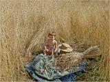 В нашем коттеджном поселке соседка всем на удивление посадила вместо газона пшеницу, которая благодарно выросла, вызрела и разбудила  воспоминания о незнакомом прошлом, в которое с удовольствием оправились наши внуки.