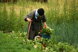 Старенькая схимонахиня на огороде. Они так привыкли к ежедневному труду, что и теперь не мыслят день без работы. Конечно, у схимников - монахов великой схимы - огромное молитвенное правило.