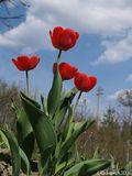 Хочу, чтобы и Вам стало также радостно от просмотра моей работы, как было мне, когда я смотрела на эти прекрасные цветы и просторное голубое небо! Ну а Вам судить, передала я настроение работой или нет! :))