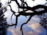 Ветви дерева, отражающиеся в воде