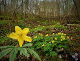 Городские цветы – пестрый мир наших будней, Вновь манят теплотой и дыханьем Весны, Что-то очень чудесное обязательно будет, Только нужно, чтоб в это поверили мы...