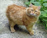 Животные Природа Кот