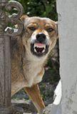 Животные Природа Собаки