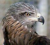 очень серьезная птица