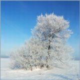 Алтай - http://altai-photo.ru/photo/