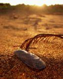 лето песок солнце