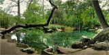 Пруд в алупкинском парке (Крым), одном из самых красивых парков в мире в части ландшафтных решений