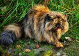 Первое лето на даче. Мелисса с ужасом обнаружила, что она не единственная  на планете из породы кошачьих. :)