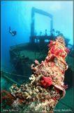 Затонувшее судно Giannis D. Риф Шааб Абу Нухас. Красное море. Риф Абу Нухас расположен в море на траспортном пути (Габальский пролив - путь из Суэцкого канала). Его не видно с поверхности. И пока на риф не поставили маяк, на риф налетали суда и тонули. Только до глубины 40м там лежит 5 судов. Сколько лежит глубже - точно никто не знает.