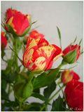 Вот такие розы.