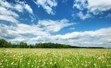 пейзаж, Россия, поле