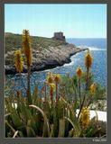 Мальта. Остров Гозо.
