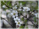 Что касательно ГРИП...так задумано...долго мучился пока поймал только один цветок...да и ветер довольно сильный был...