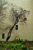 Эти окна светолюбивые петербуржцы прорубали сами-дело Петра живет и побеждает.Клумба, к сожалению, полностью  не поместилась. Мешал автомобиль несознательного жильца.