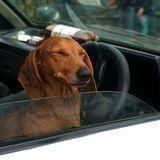 про таксу,правый руль и страну восходящего солнца :)