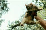Время Летать..или..великое путешествие кошки в поднебесье.[во время полётов никто не пострадал])))
