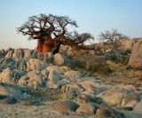 Африка Ботсвана Калахари