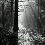 Киев-88, утро, лес