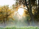 2005год.Утро. Усадьба Суханово.Туман солнце не щадило...