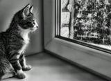 Котенок,окно,черно-белое